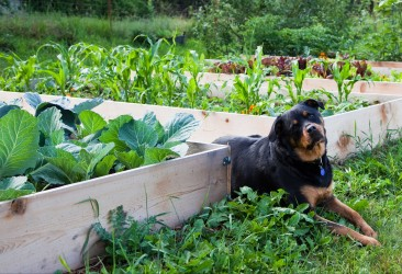 7 barriers to gardening in Colorado